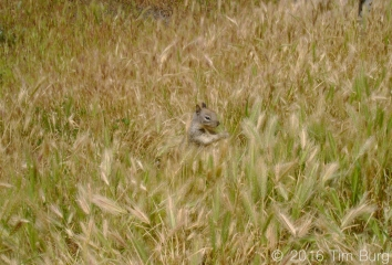 squirrel with copyright 7_edited-1