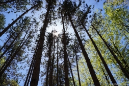 tall trees_edited-1