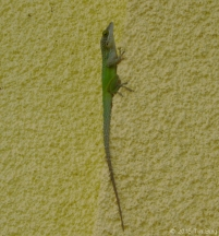 lizard_edited-1