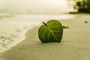 beach-394503__480