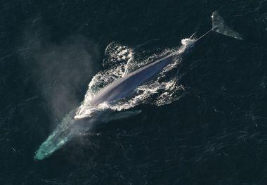 blue-whale-1198719__480
