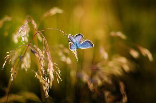 butterfly-1938978__480