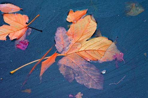 autumn-leaf-3876213__480